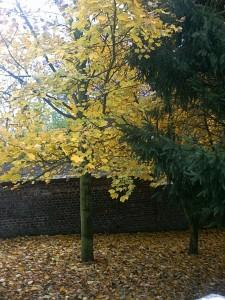 Le jardin de l'école